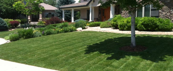 Denver, Littleton and Highlands Ranch lawn mowing