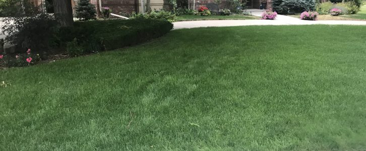 Denver, Littleton and Highlands Ranch lawn care